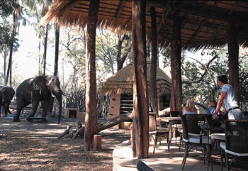 sandibe safari lodge okavango delta luxury safari